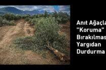 """Anıt Ağaçların """"Koruma"""" Dışı Bırakılmasına Yargıdan Durdurma"""